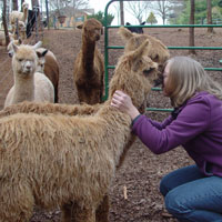 girl kissing alpaca